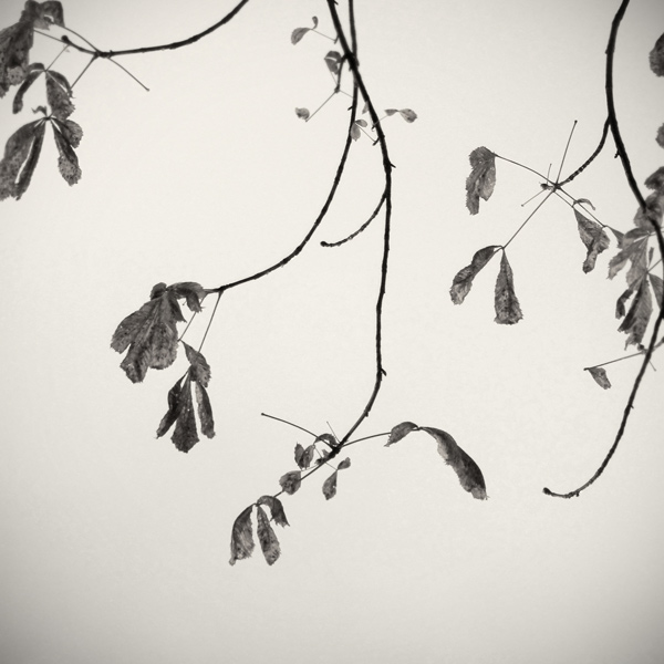 autumnfeeling2AFW